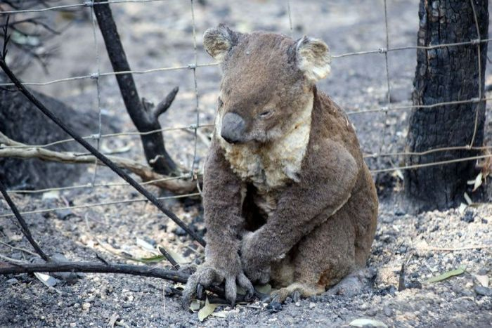 It's estimated that 1 billion animals have been killed in the fires, but the real number is likely to be far higher. (Supplied: M Fillinger)