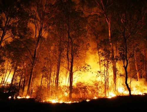 Bushfire royal commission: 'Black Summer' played out exactly as scientists predicted it would