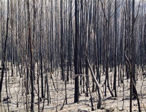 The size of Australia's bushfire crisis captured in five big numbers